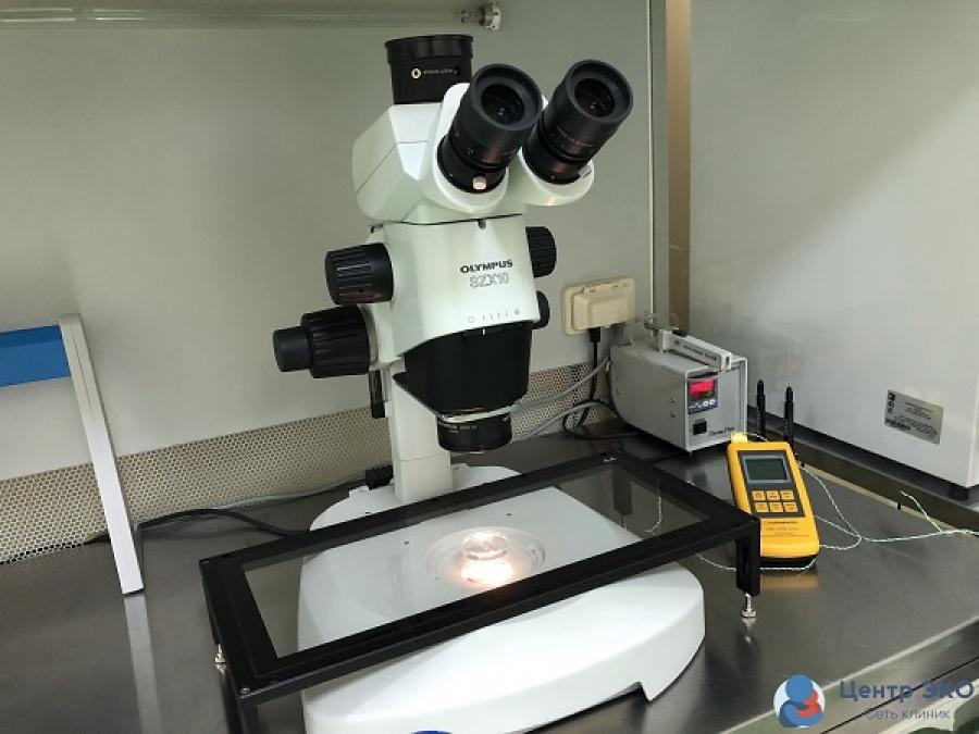 Потологическое форма изменения головки сперматозоида
